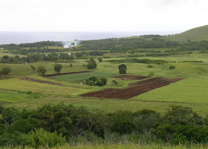 champs de légumes et fruits