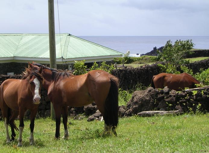 chevaux,Rapa Nui