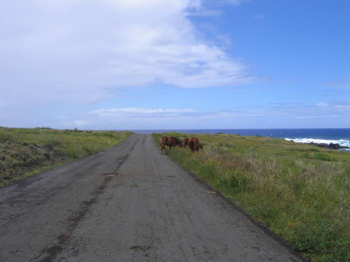 route de la côte sud