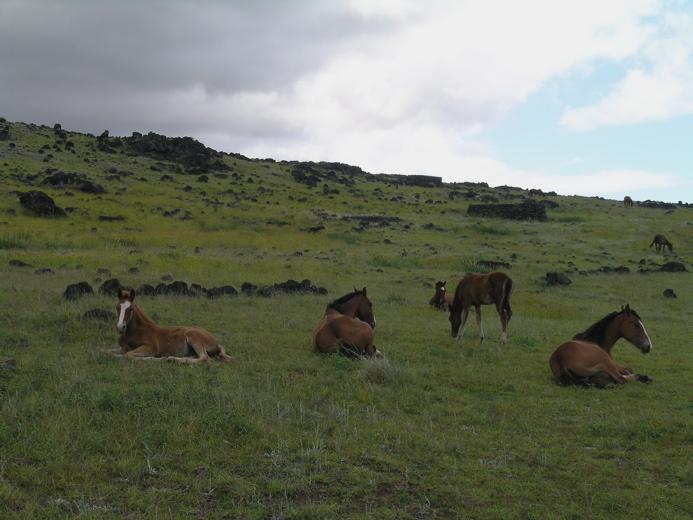 ahu, hare moa, chevaux ...