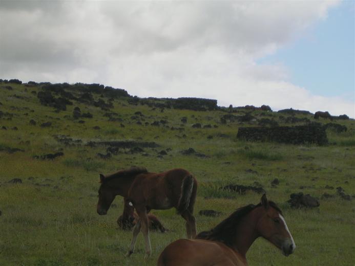 chevaux, hare moa ou maisons de poules