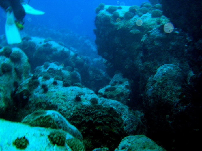 coraux et oursins