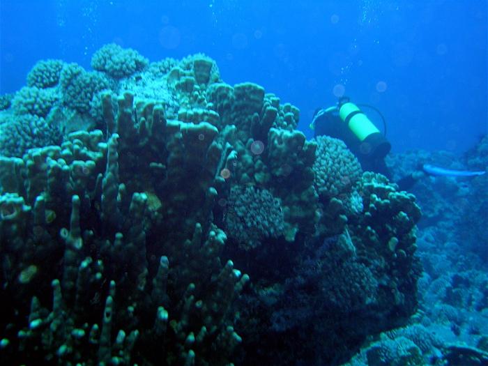 pasage entre les coraux