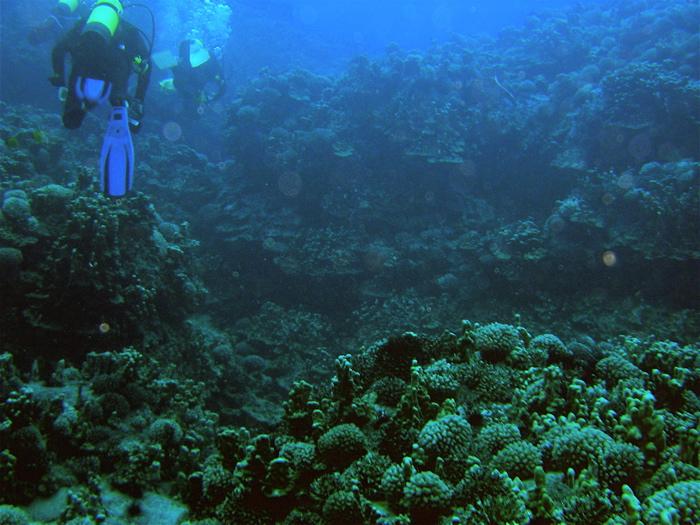 coraux ...