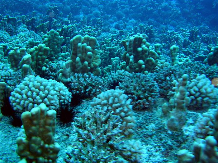 tapis de coraux