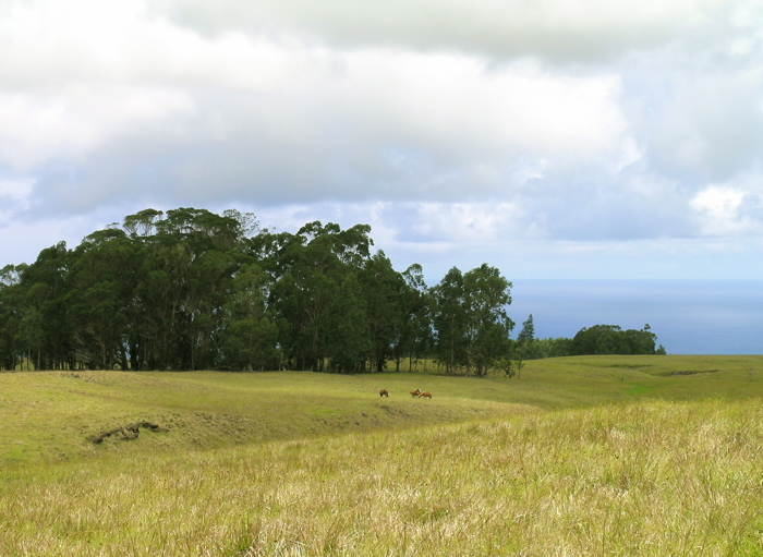petite forêt d'eucalyptus