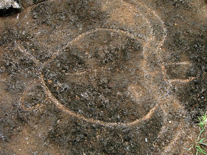 pétroglyphe : tortue